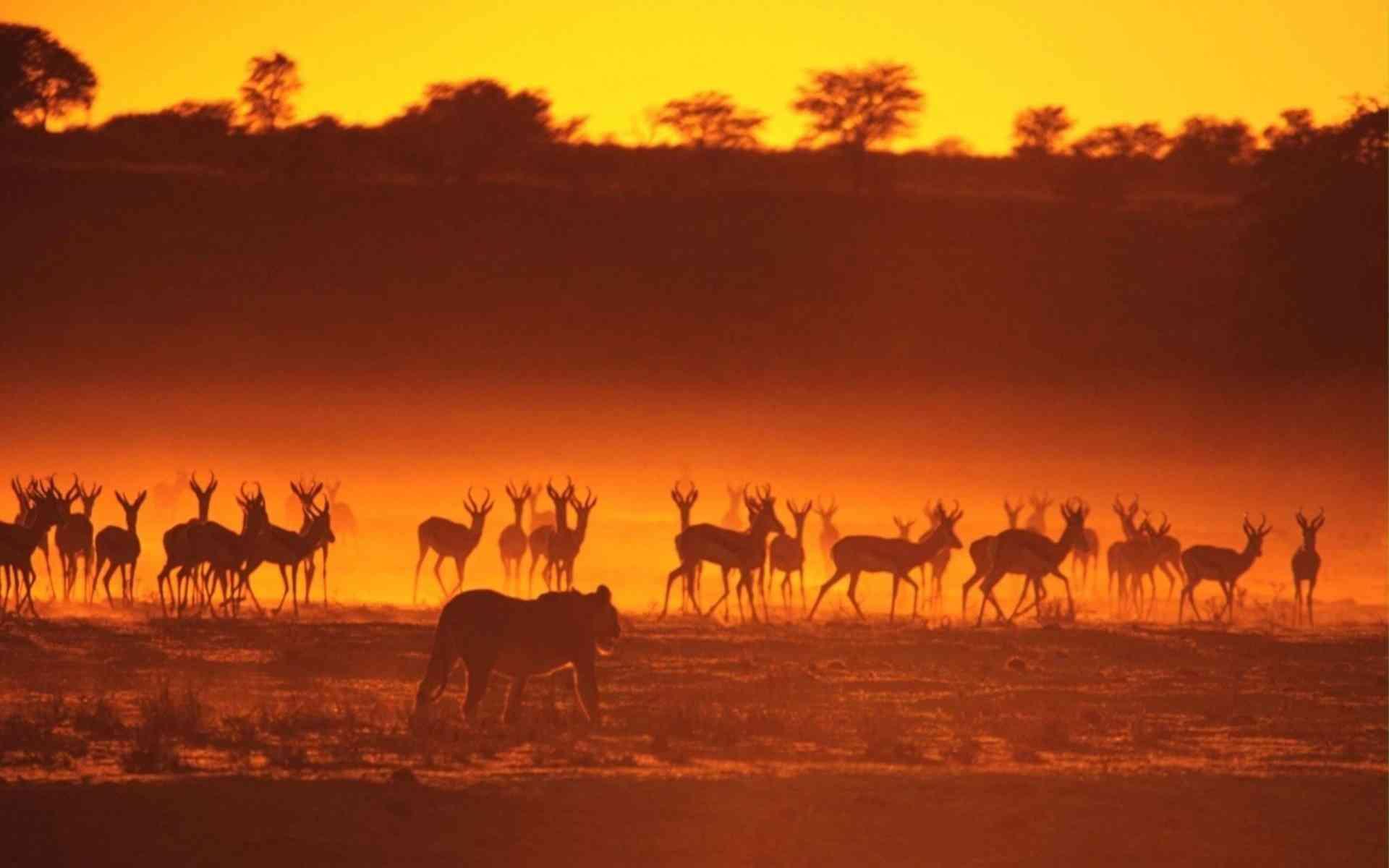 Safari en Afrique, faire appel à de vrais professionnels